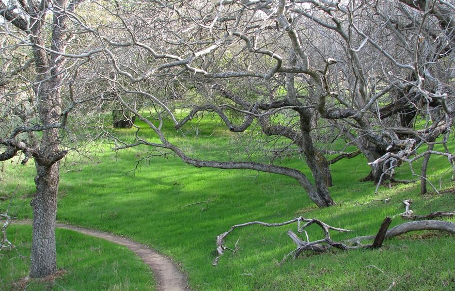 Lime Ridge | Open Space | City of Walnut Creek