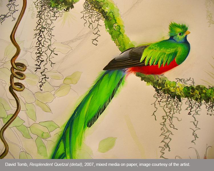 Birds_David Tomb